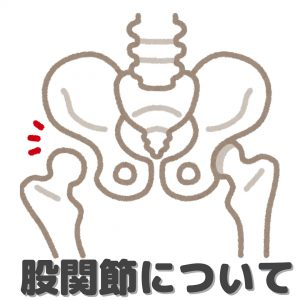 股関節について